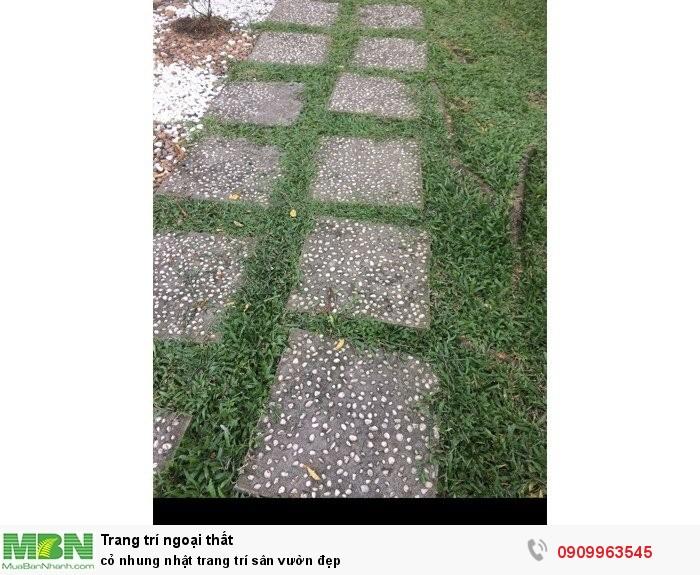 Cỏ nhung nhật trang trí sân vườn đẹp4