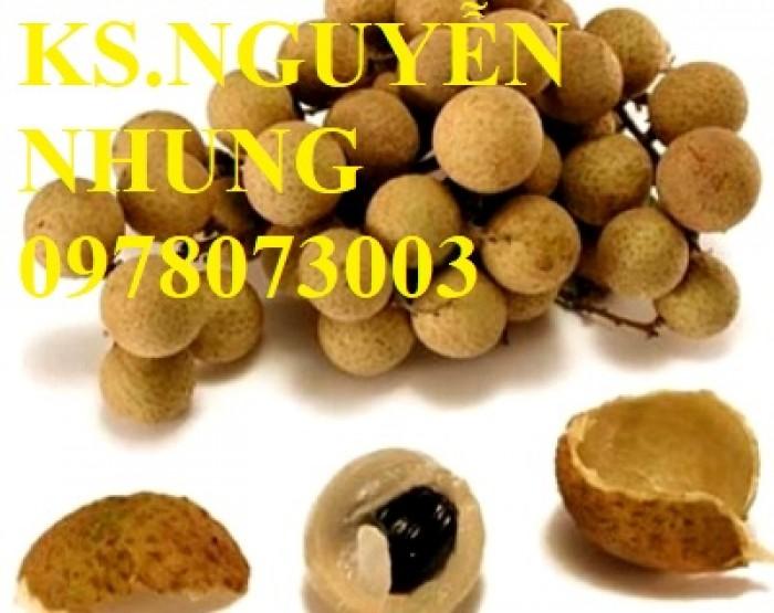 Chuyên cung cấp giống cây nhãn các loại, giống nhãn ido, nhãn Miền Thiết, nhãn Hà Tây T6, nhãn hương chi0