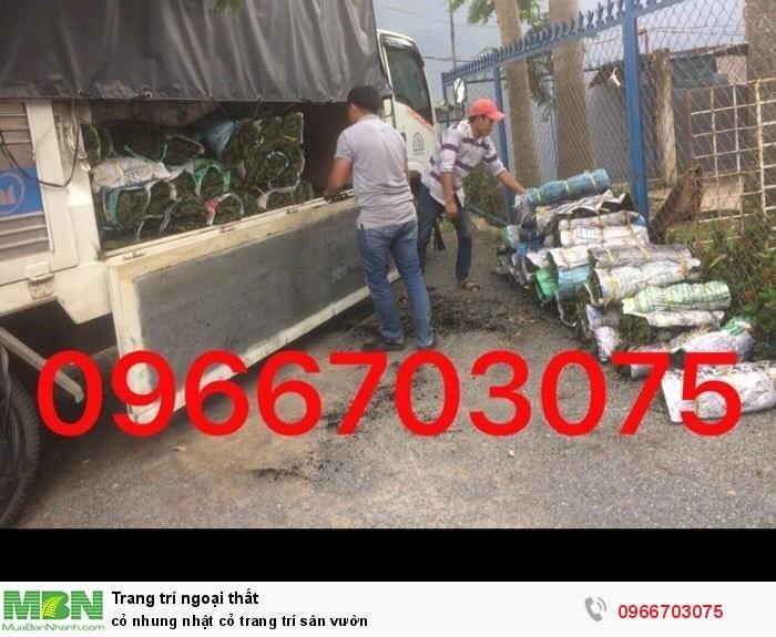 bán cỏ nhung nhật hcm1