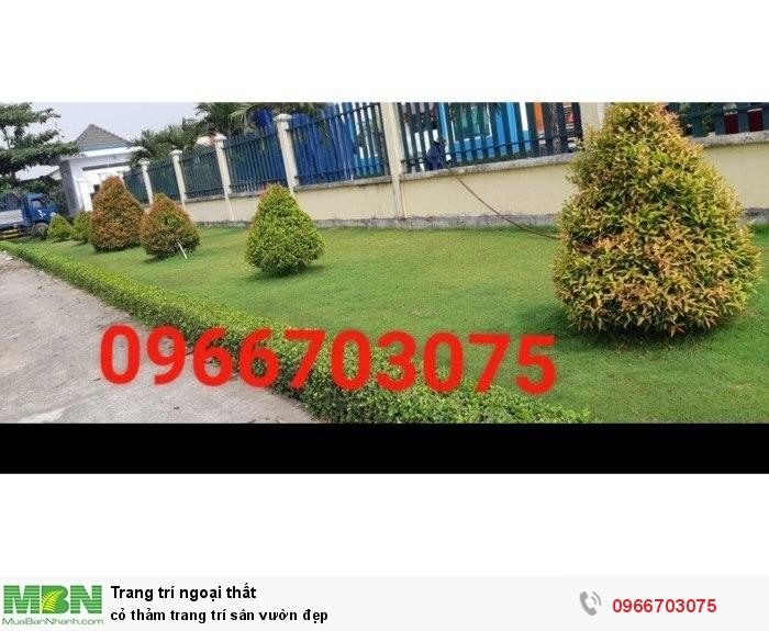 Cỏ thảm trang trí sân vườn đẹp3