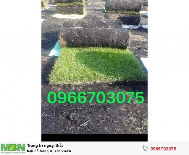 Bán cỏ trang trí sân vườn2