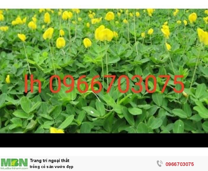 Trồng cỏ sân vườn đẹp
