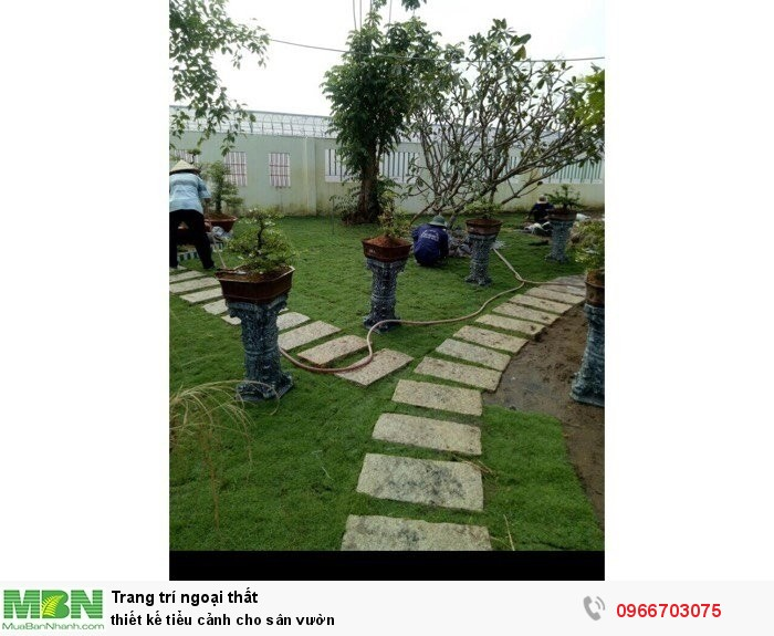 Cung cấp các loại cỏ kiểng trang trí1