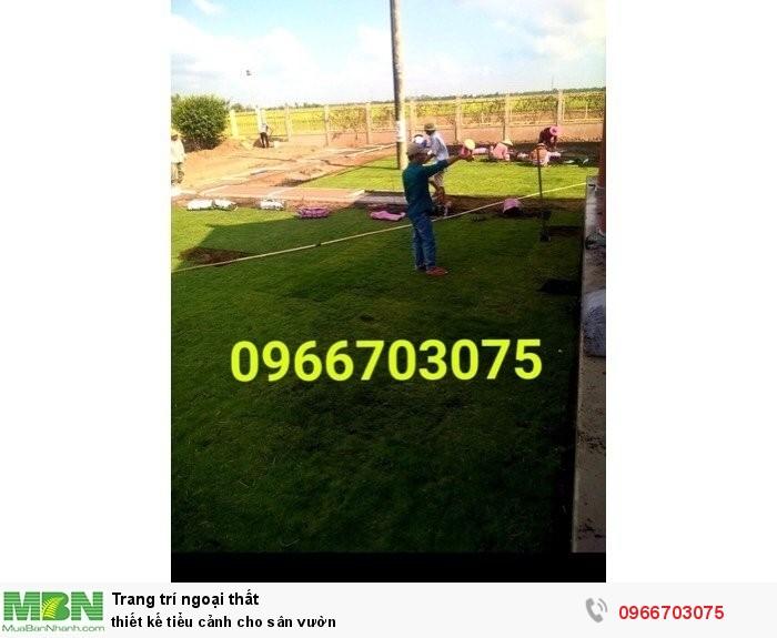 Cung cấp các loại cỏ kiểng trang trí4