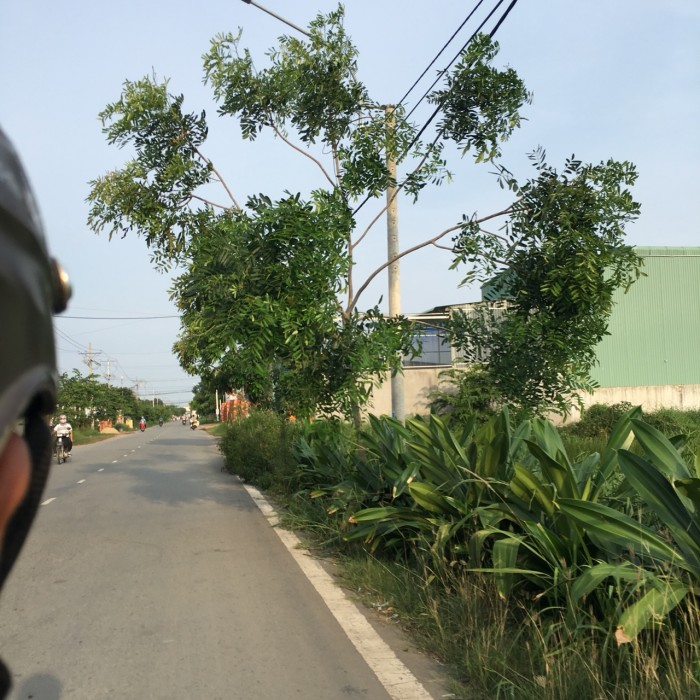 Bán gấp lô đất 310m2 đường hóc hưu, xã hưng long, huyện bình chánh.