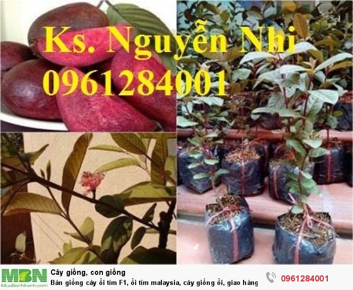 trồng cây ổi tím8