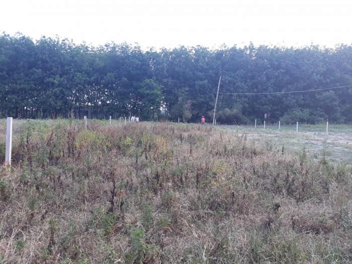 Đất sau BV đa khoa Củ Chi, DT: 9x53m, có 250m2 thổ cư