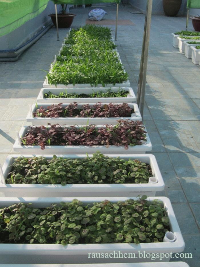 Chậu kẹp ban công, lan can, chậu nhựa PP  trồng rau sạch sân thượng,1