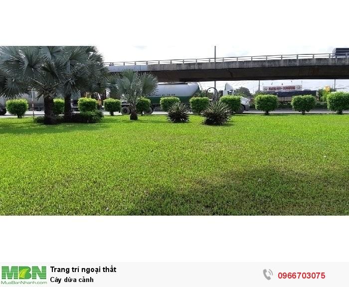 Cây cảnh trang trí sân vườn1