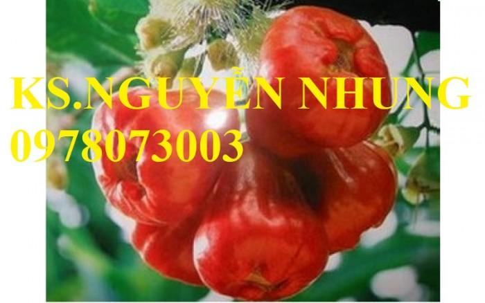Bán giống cây roi thái lan chuẩn giống, siêu quả, giá cả hợp lý3