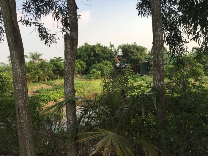Bán 1000m2 đất đường oto, xã Hưng Long, Bình Chánh