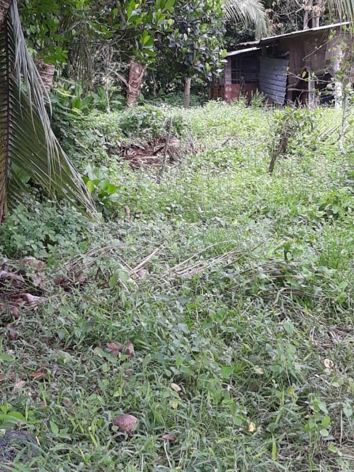 Sang gấp vài lô đất ở Phước Đông, TN.