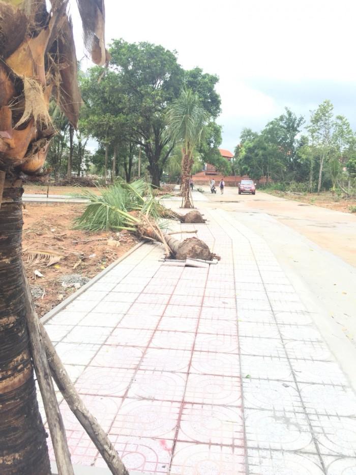 Cây Thông Ngoài-Cửa Dương-Phú Quốc-Kiêng Giang