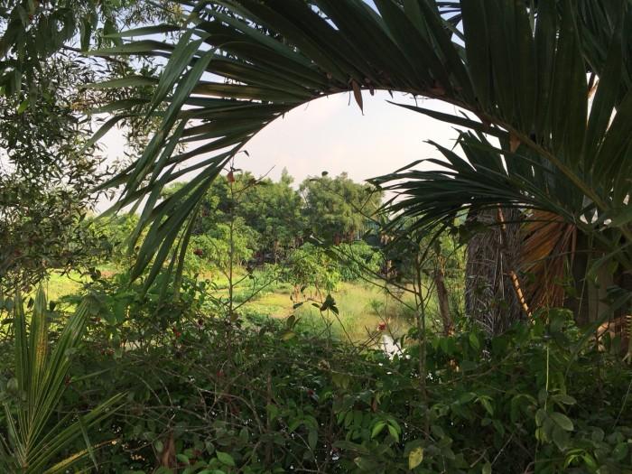 Đất Mặt Tiền Đường Hóc Hưu, Xã Quy Đức, Bình Chánh. 2900M2