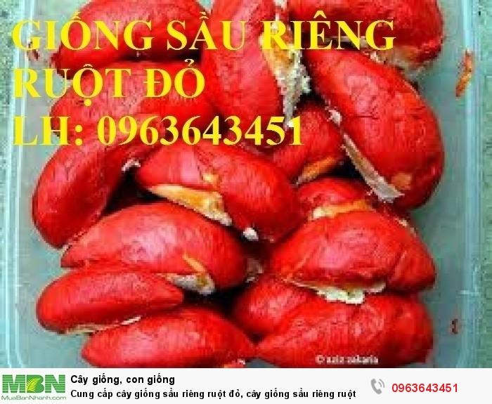 Cung cấp cây giống sầu riêng ruột đỏ, cây giống sầu riêng ruột đỏ nhập khẩu Malaysia chuẩn, uy tín, chất lượng