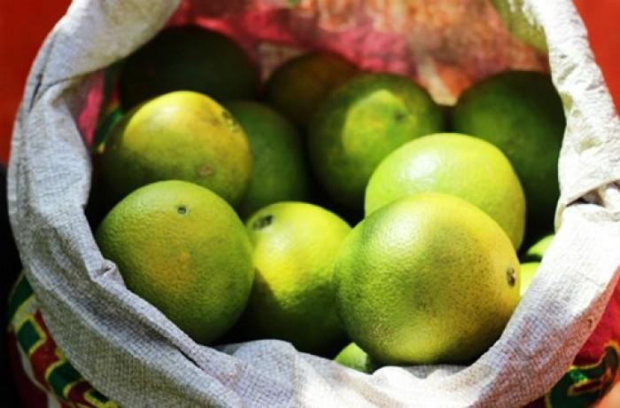 Cây cam cara ruột đỏ không hạt - viencaygiongtrunguong, cây giống chất lượng cao14