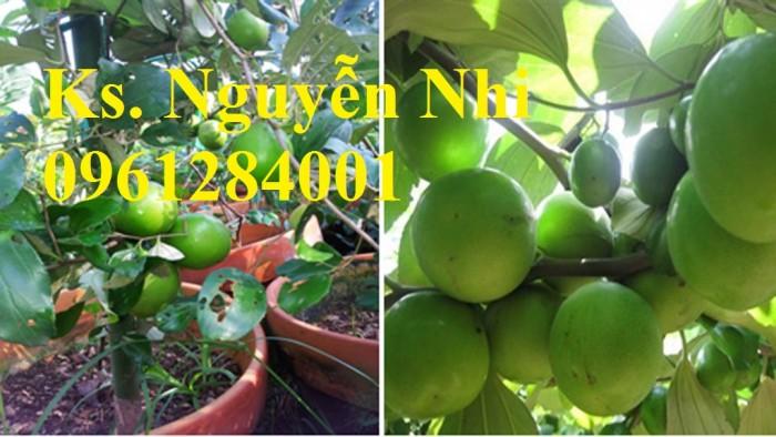 Bán giống táo D28, chuẩn giống, số lượng lớn, giao cây toàn quốc9