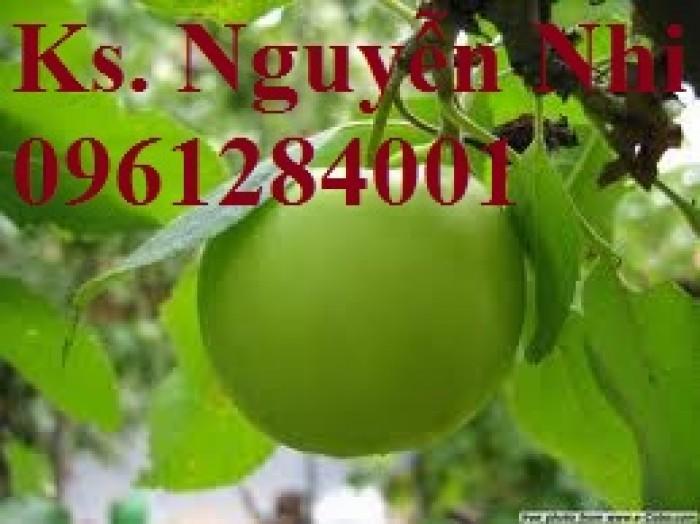 Bán giống táo D28, chuẩn giống, số lượng lớn, giao cây toàn quốc11