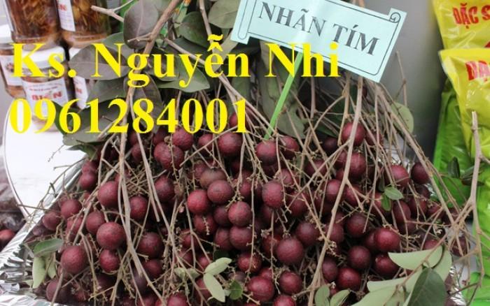 Bán cây giống nhãn tím, nhãn không hạt, chuẩn giống, giao cây toàn quốc.7