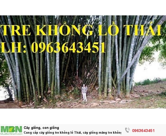 Cung cấp cây giống tre khổng lồ Thái, cây giống măng tre khổng lồ Thái Lan nhập khẩu chuẩn, uy tín0