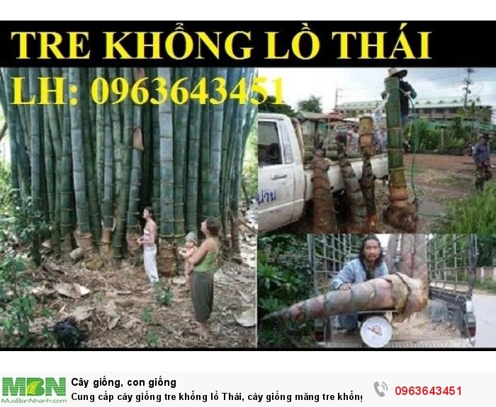 Cung cấp cây giống tre khổng lồ Thái, cây giống măng tre khổng lồ Thái Lan nhập khẩu chuẩn, uy tín4