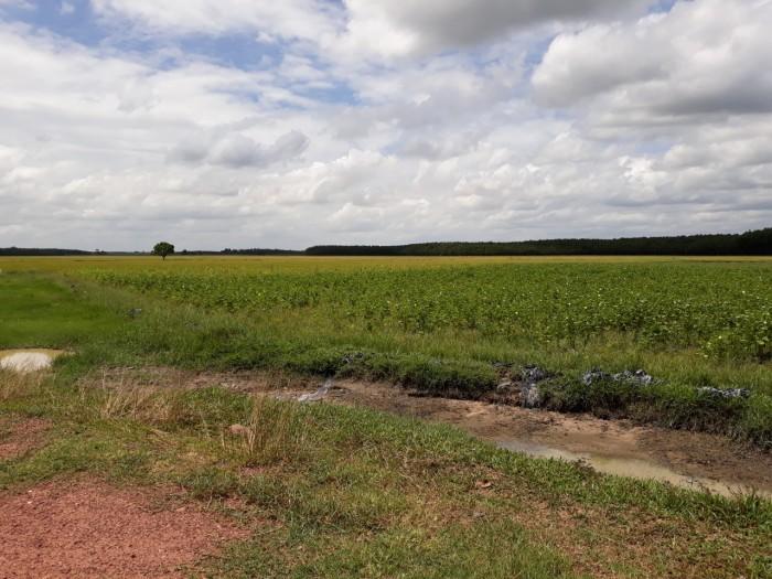 Cần ra gấp vài lô đất gần ngã 4 nông trường, KCN lớn.