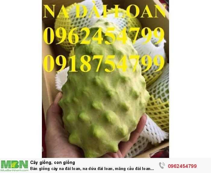 Bán giống cây na đài loan, na dứa đài loan, mãng cầu đài loan chuẩn giống nhập khẩu1