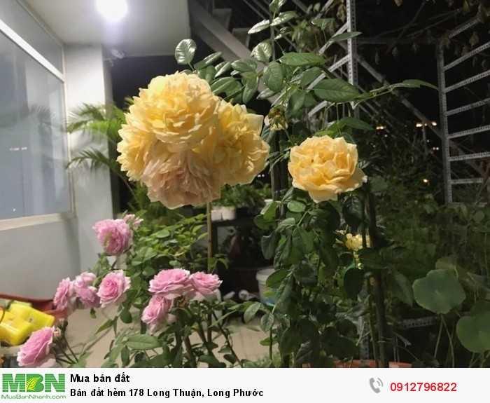 Bán đất hẻm 178 Long Thuận, Long Phước