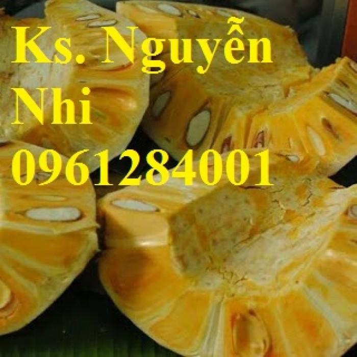 Chuyên cung cấp Giống mít thái ruột đỏ, giống mít không hạt, mít thái, mít trái dài malaysia10