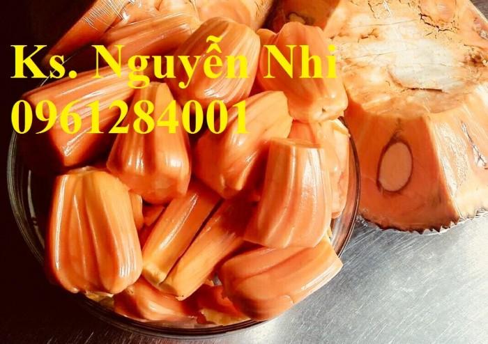 Chuyên cung cấp Giống mít thái ruột đỏ, giống mít không hạt, mít thái, mít trái dài malaysia15