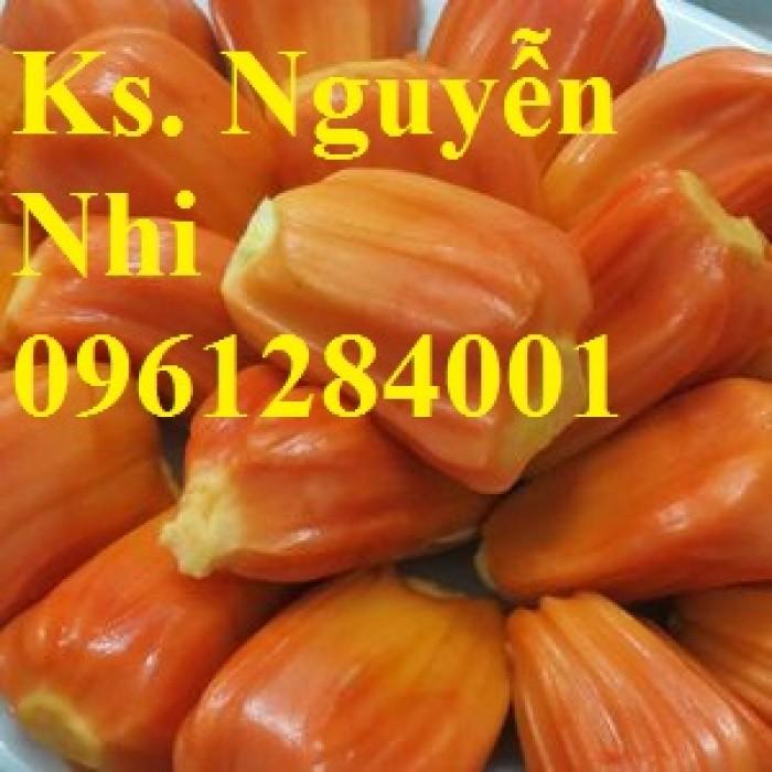 Chuyên cung cấp Giống mít thái ruột đỏ, giống mít không hạt, mít thái, mít trái dài malaysia16