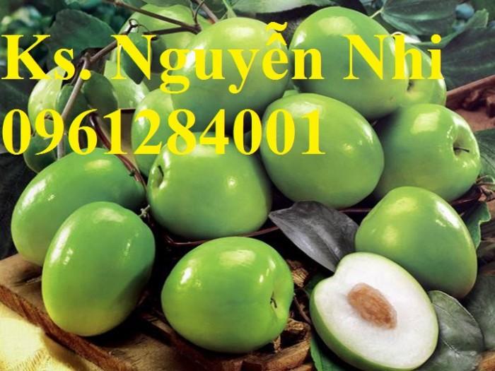 Bán cây giống táo thái lan, số luợng lớn, giao cây toàn quốc.6