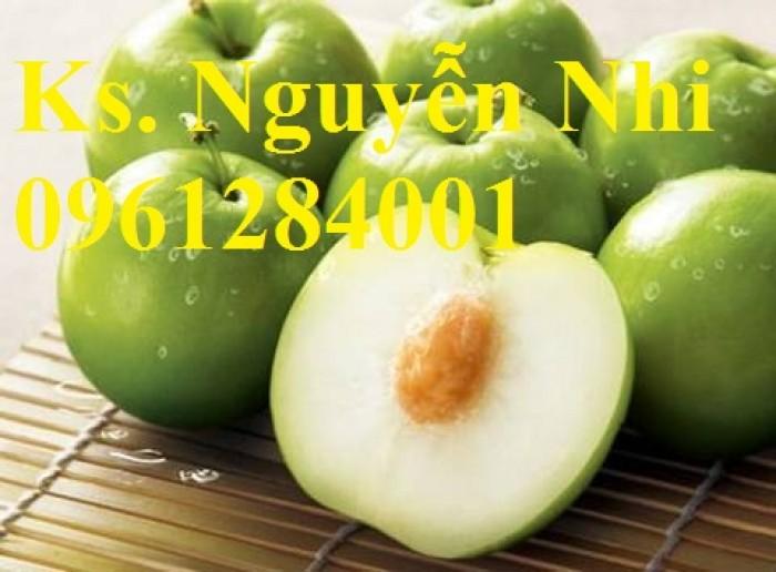 Bán cây giống táo thái lan, số luợng lớn, giao cây toàn quốc.9
