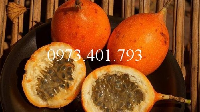 Giống chanh leo ngọt colombia, chanh leo ngọt, cây chanh colombia, chanh leo ngọt, thông tin chanh comlombia8