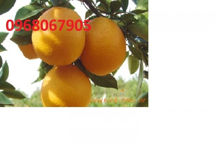 quả cam vinh0