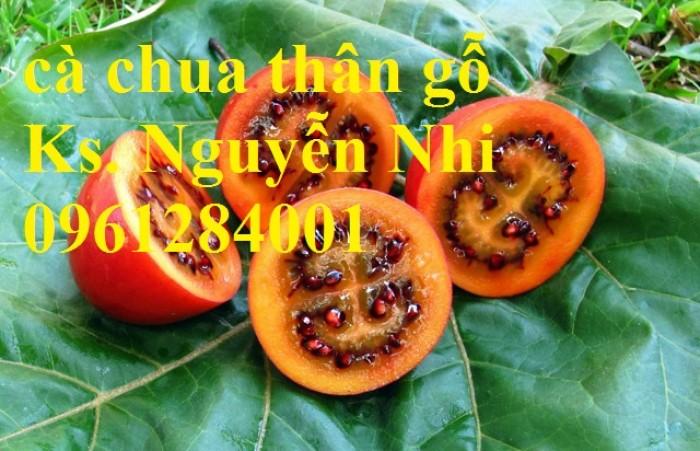 Địa chỉ cung cấp giống cây cà chua thân gỗ uy tín, chất lượng11