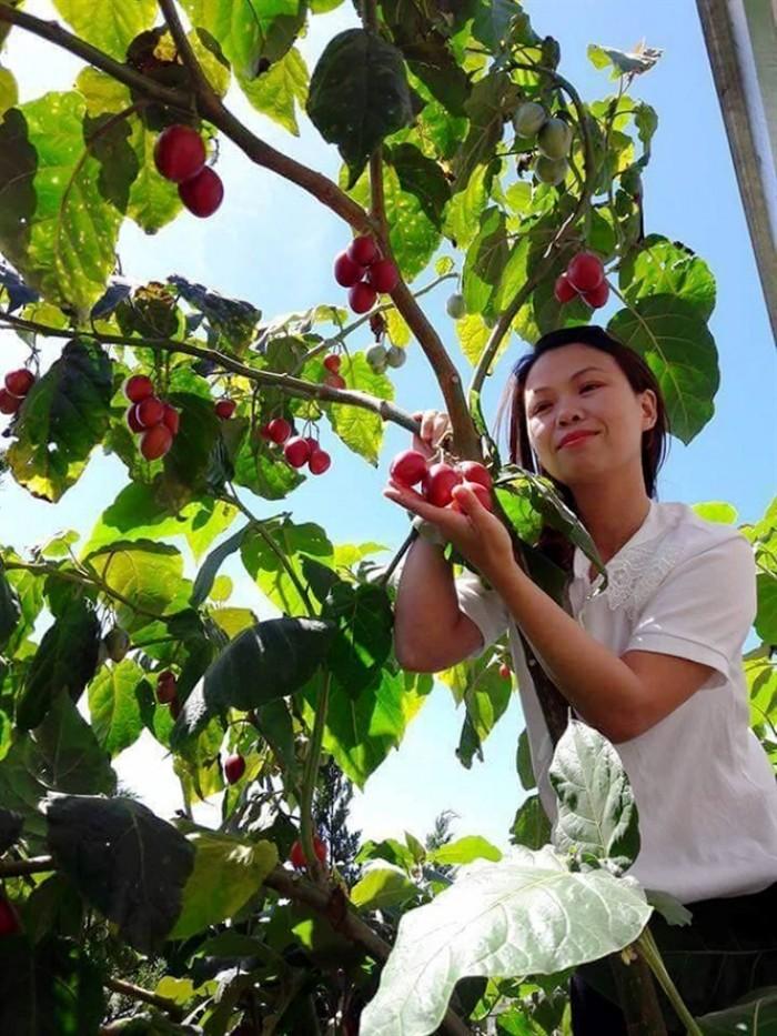 Địa chỉ cung cấp giống cây cà chua thân gỗ uy tín, chất lượng15