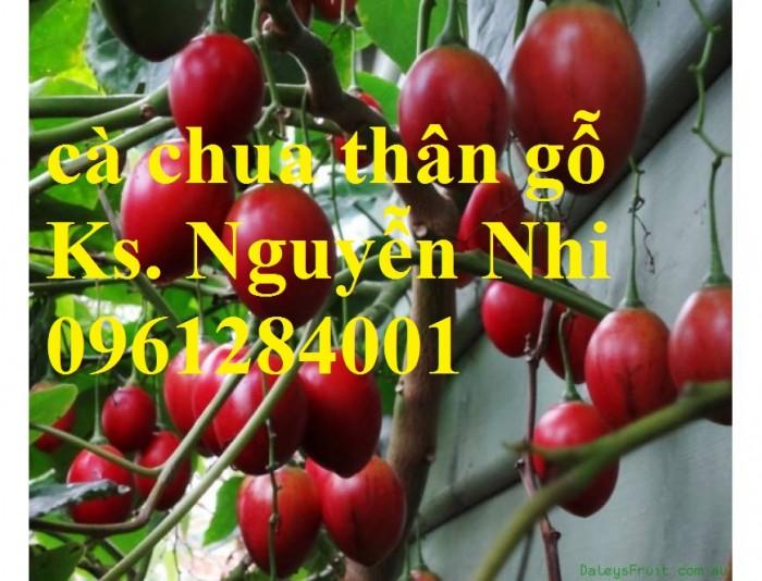 Địa chỉ cung cấp giống cây cà chua thân gỗ uy tín, chất lượng14