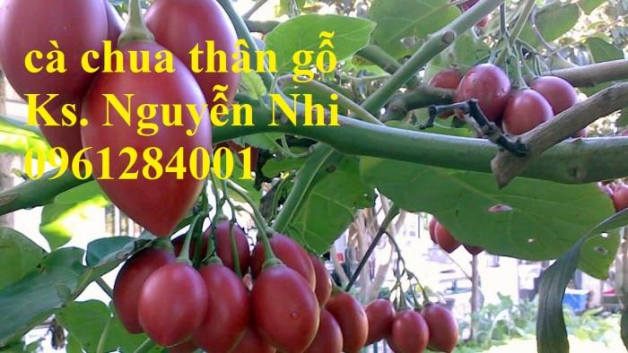 Địa chỉ cung cấp giống cây cà chua thân gỗ uy tín, chất lượng16