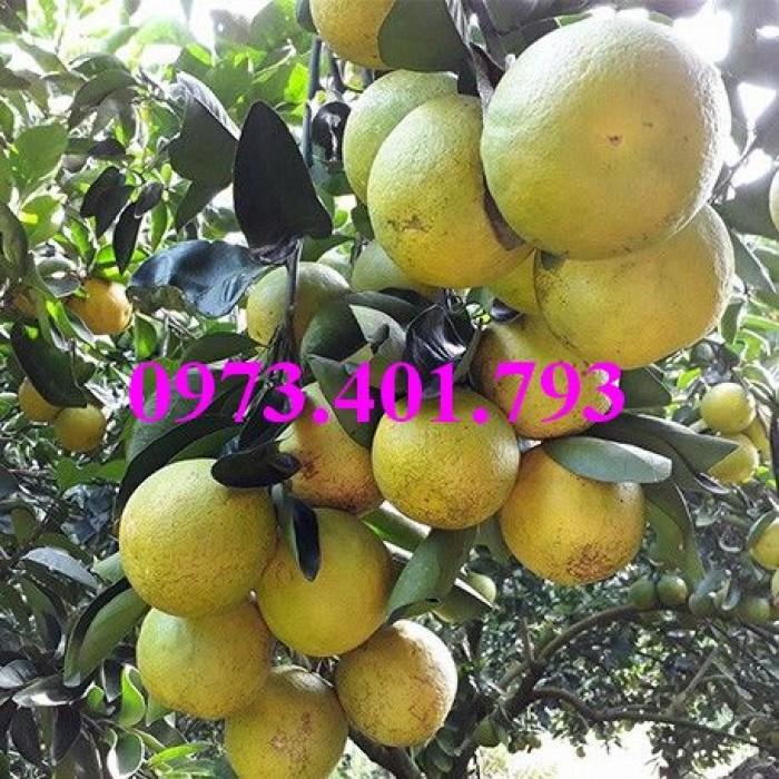Các loại cây giống cam12