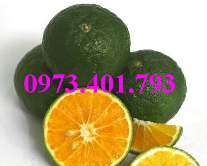 Các loại cây giống cam13