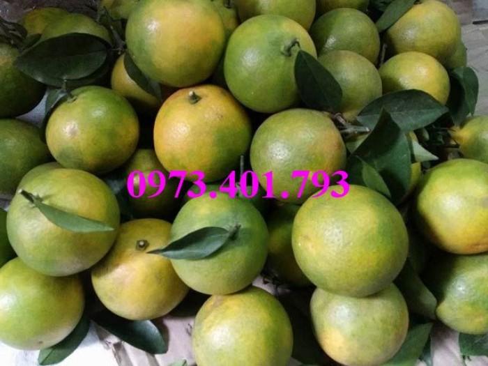 Các loại cây giống cam14