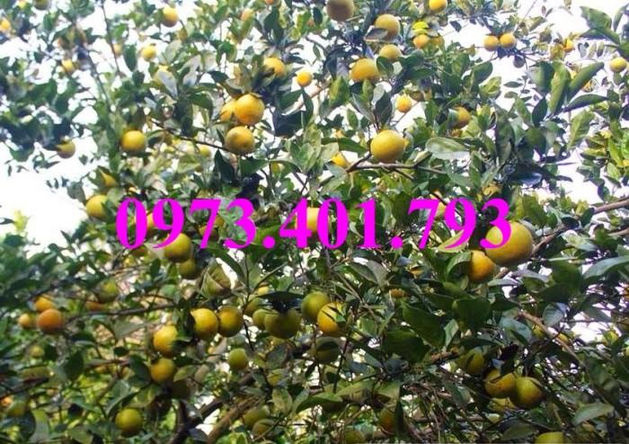 Các loại cây giống cam15