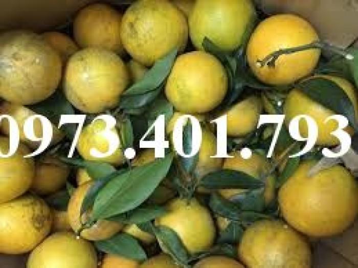 Giống cây cam Vinh, cam Vinh, cây cam Vinh, cây cam, kĩ thuật trồng cây cam9