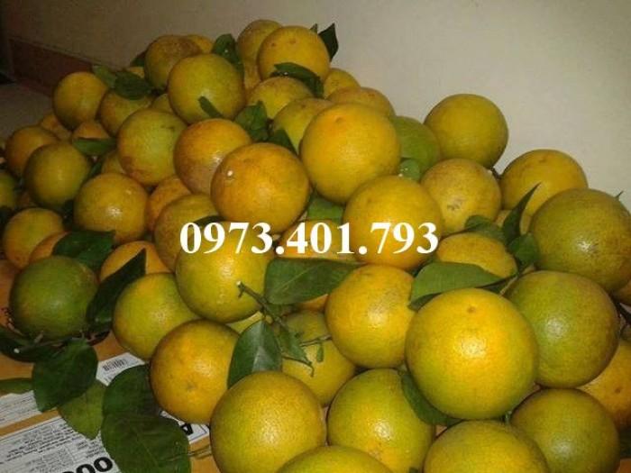 Giống cây cam Vinh, cam Vinh, cây cam Vinh, cây cam, kĩ thuật trồng cây cam10