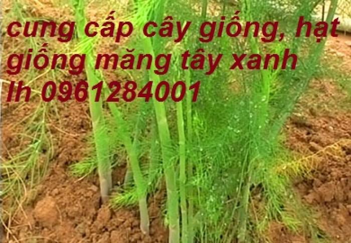 Cung cấp cây giống, hạt giống măng tây xanh, hàng loại 1, cam kết chất lượng11