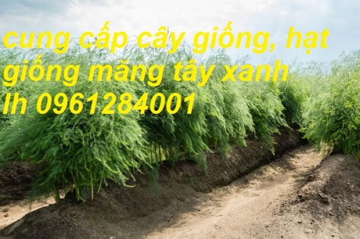 Cung cấp cây giống, hạt giống măng tây xanh, hàng loại 1, cam kết chất lượng7