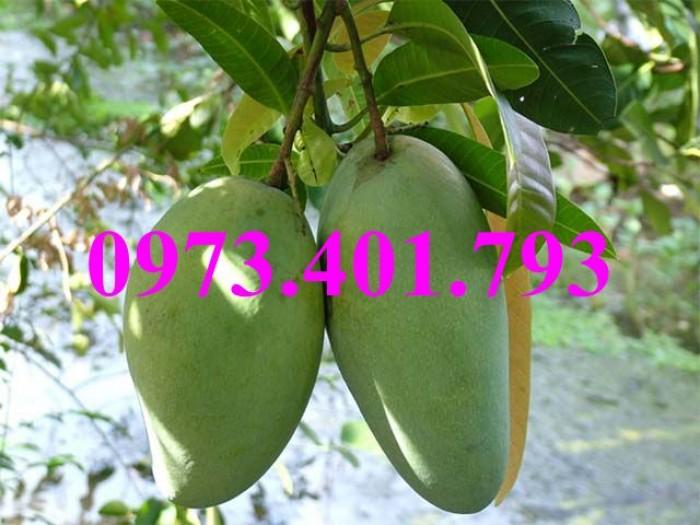 Giống cây xoài Đài Loan, cây xoài , kĩ thuật trồng xoài, cây xoài Đài Loan, xoài4