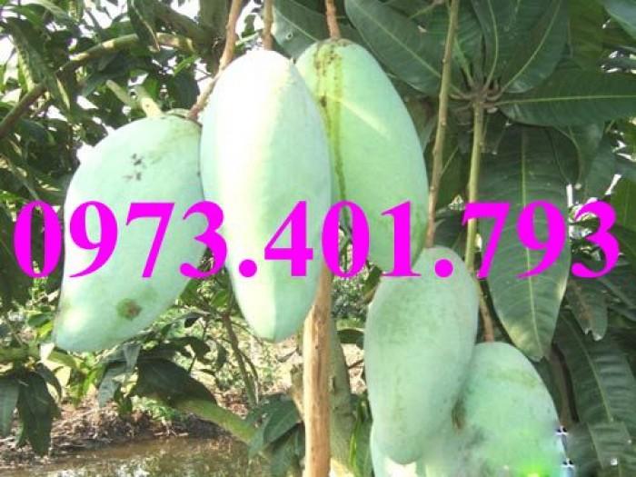 Giống cây xoài Đài Loan, cây xoài , kĩ thuật trồng xoài, cây xoài Đài Loan, xoài7