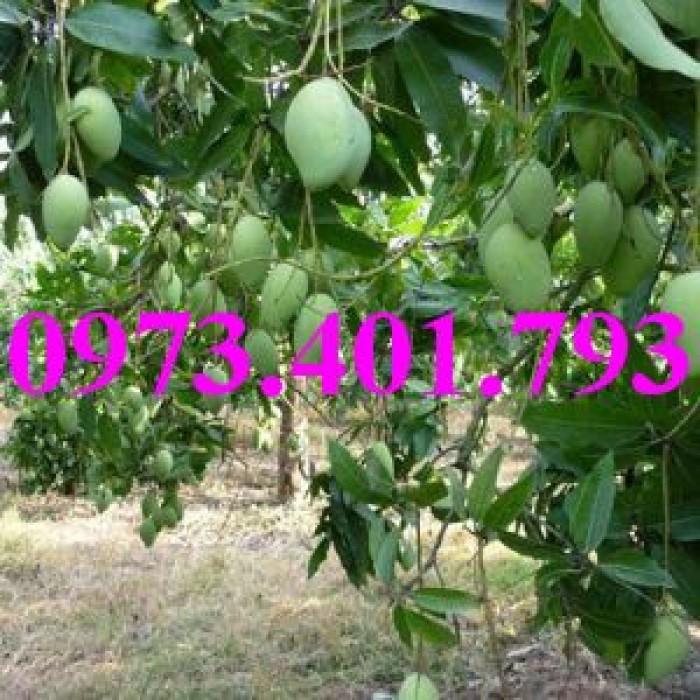 Giống cây xoài Đài Loan, cây xoài , kĩ thuật trồng xoài, cây xoài Đài Loan, xoài9